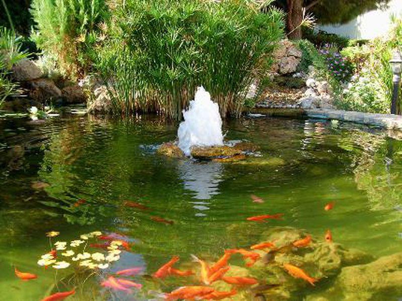 фото фонтана в пруду для сада