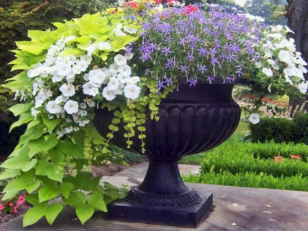 Фото цветов для сада в вазоне